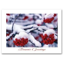 Frostberry Branches Holiday Card