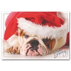 Holiday Pooch Holiday Card